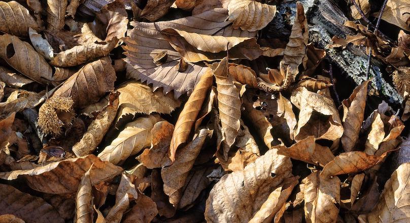 feuilles mortes residus verts photo Kanenori via Pixabay et INFOSuroit