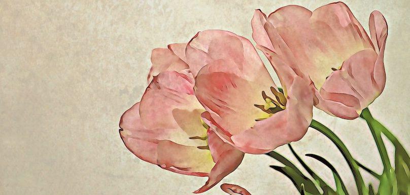 Fleurs tulipes printemps peinture photo Vargazs via Pixabay et INFOSuroit