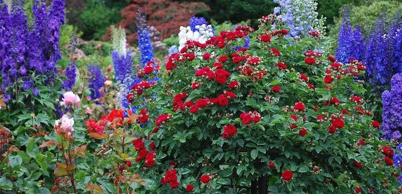 Période des inscriptions pour le concours Jardins Fleuris à ...