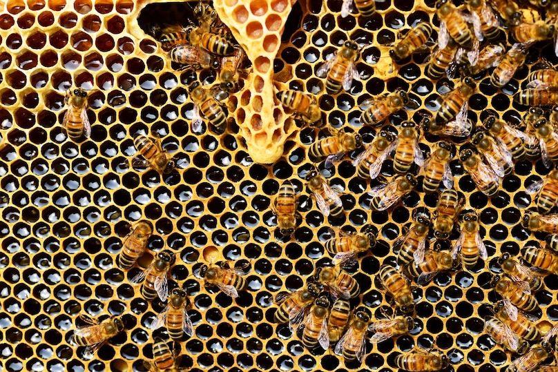 abeilles ruche miel insectes pollinasateurs photo PollyDot via Pixabay et INFOSuroit