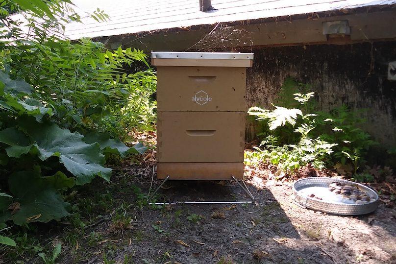 ruche Alveole pour abeilles a la Pointe-du-Buisson juil2019 photo courtoisie PdB