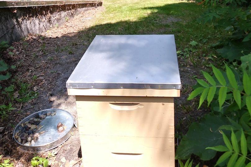ruche abeilles a la Pointe-du-Buisson juil2019 photo courtoisie PdB