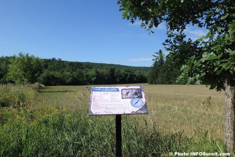 sentiers-de-l_Escapade-mont-Rigaud-panneau-Urubu-a-tete-rouge-photo-INFOSuroit
