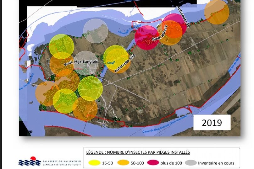 carte aout 2019 presence agrile du frene a Valleyfield visuel courtoisie