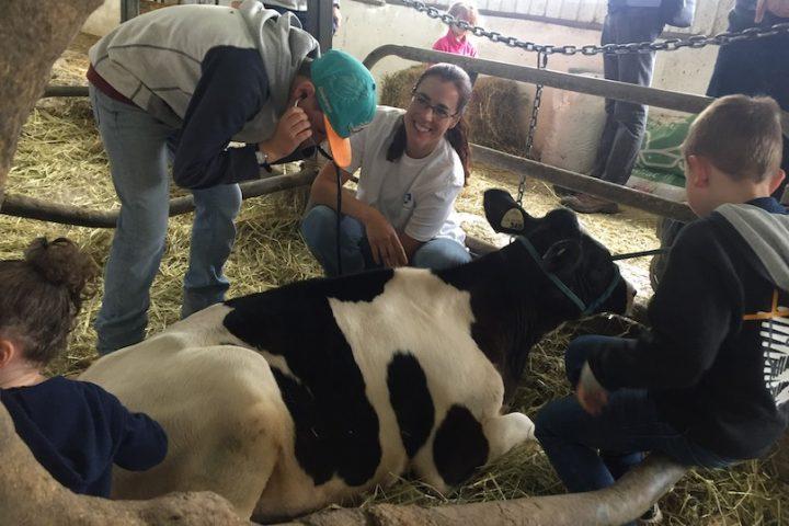 Coteau-du-Lac Ferme Isabelle vache visiteurs portes ouvertes sur fermes photo UPA