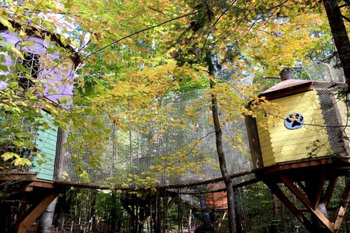 Village Arbre en ciel modules dans les arbres automne photo via Facebook