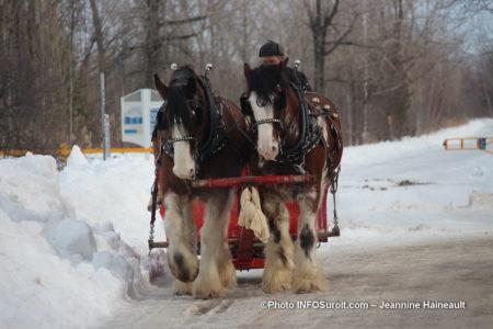 chevaux caleche carnaval hiver St-Stanislas-de-Kostka photo JHaineault INFOSuroit