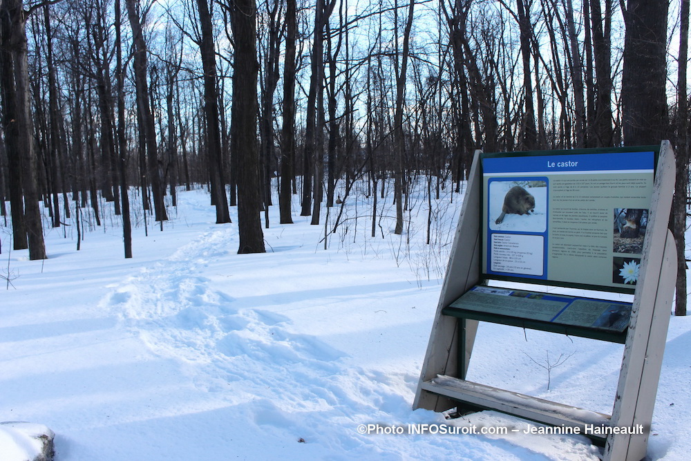 hiver-neige-sentier-parc-regional-des-iles-St-Timothee-fev20-photo-JHaineault-INFOSuroit