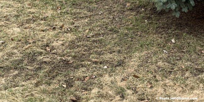 rattelage pelouse terrain printemps photo INFOSuroit avr2020